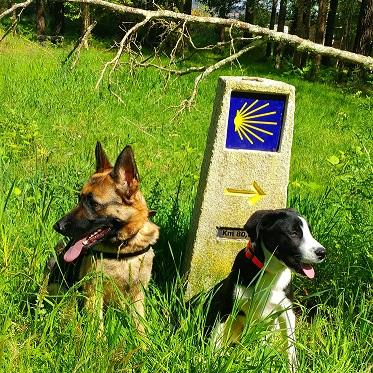 Camino de Santiago en grupo y con perro