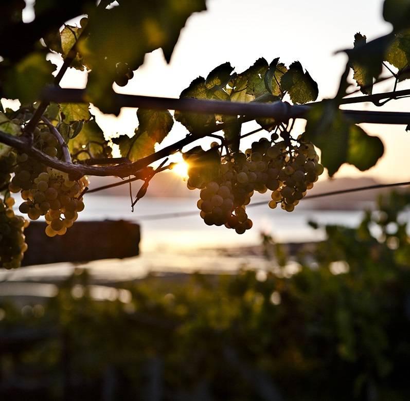 Gastro-Camino: food&wine ont the Portuguese and Fisterre Camino
